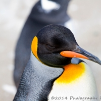 Edinburgh Zoo 2014 Part2
